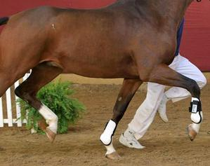 Proven Equine trace minerals and supplements